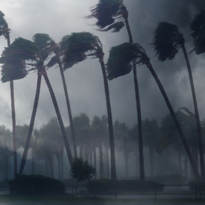 Hurricane Trees